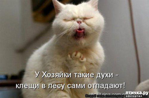 фото 10: Весенние веселые коты)))