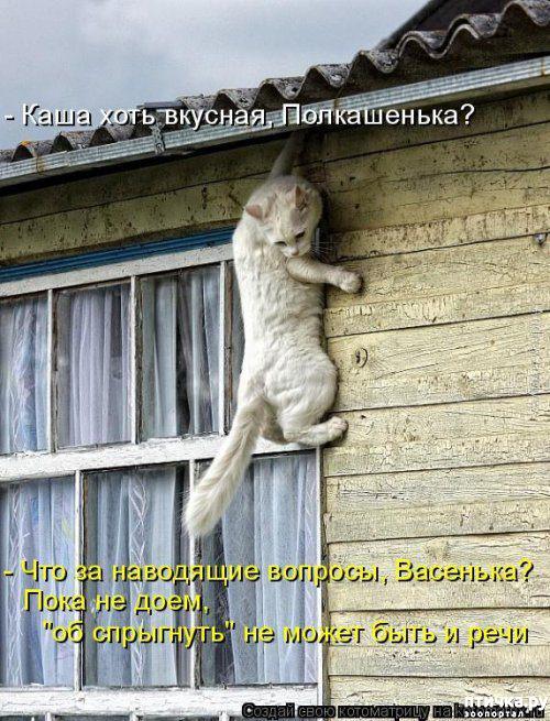 фото 11: Весенние веселые коты)))