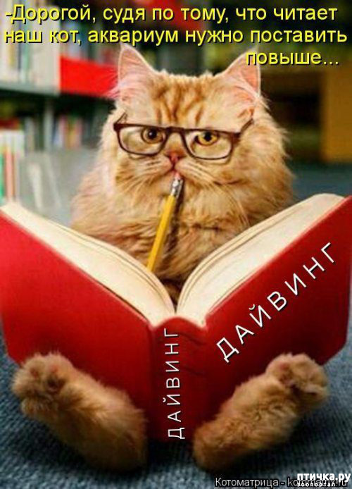фото 12: Весенние веселые коты)))