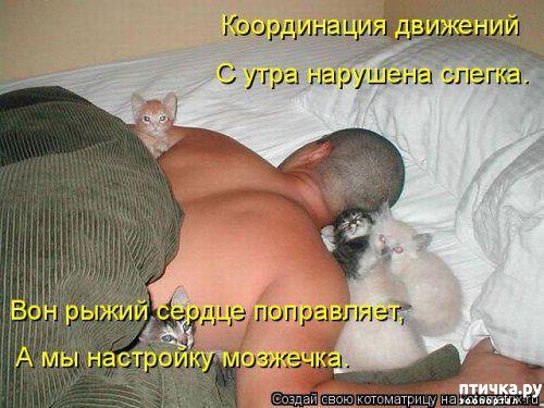фото 13: Весенние веселые коты)))