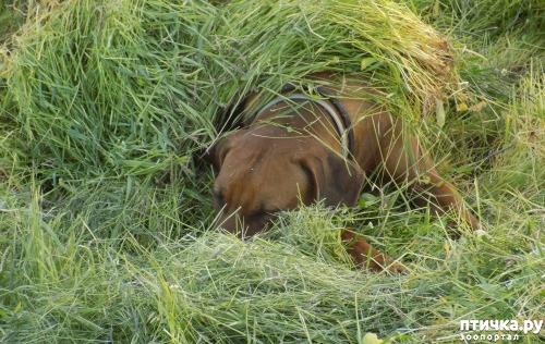 фото 3: Весна и собачья радость.