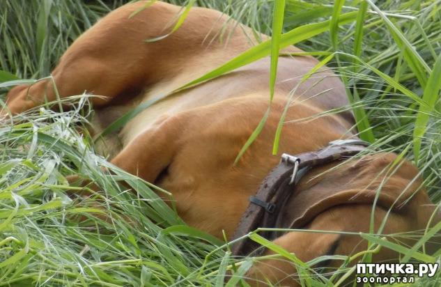фото 4: Весна и собачья радость.