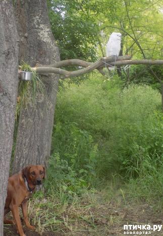 фото 14: Весна и собачья радость.