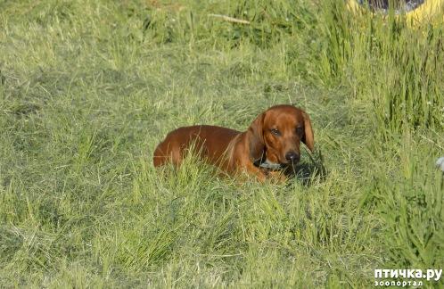 фото 15: Весна и собачья радость.