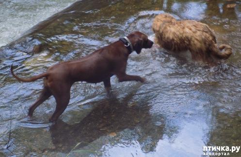 фото 20: Весна и собачья радость.