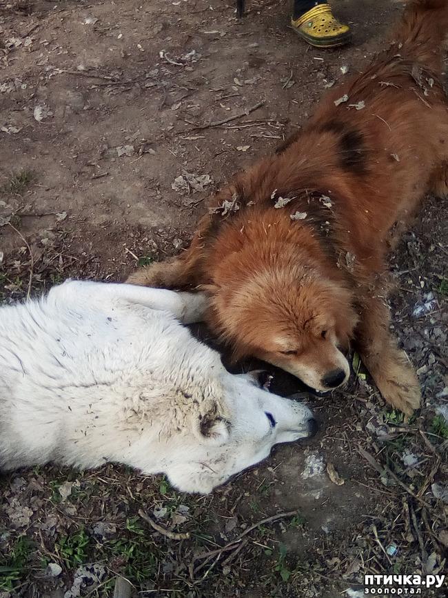фото 23: Весна и собачья радость.