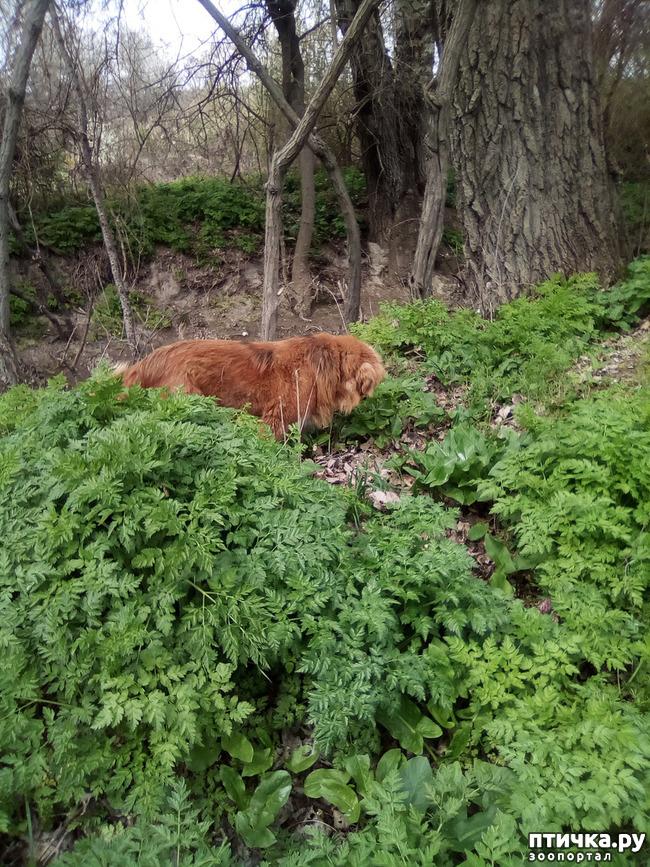 фото 24: Весна и собачья радость.