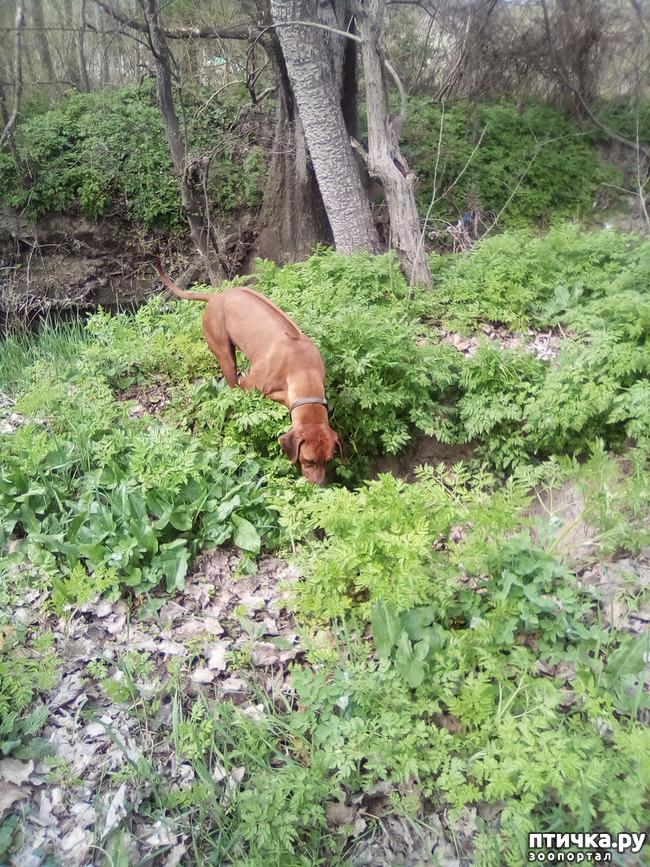 фото 25: Весна и собачья радость.