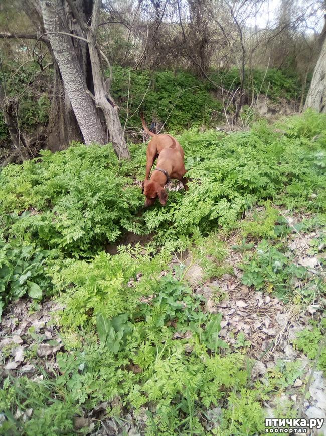 фото 26: Весна и собачья радость.