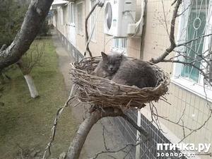 фото: Из серии: Коты прилетели