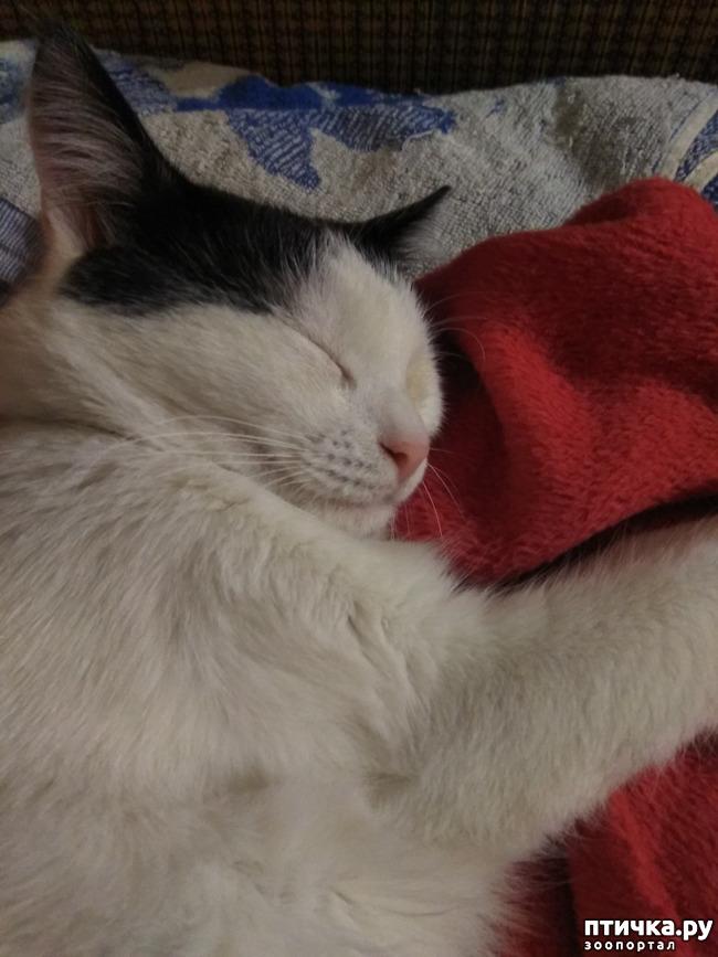 фото 1: Снятся ли кошкам кошмары...
