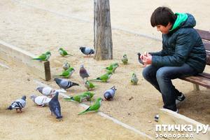 """фото: """"Голуби"""" в разных странах мира)"""