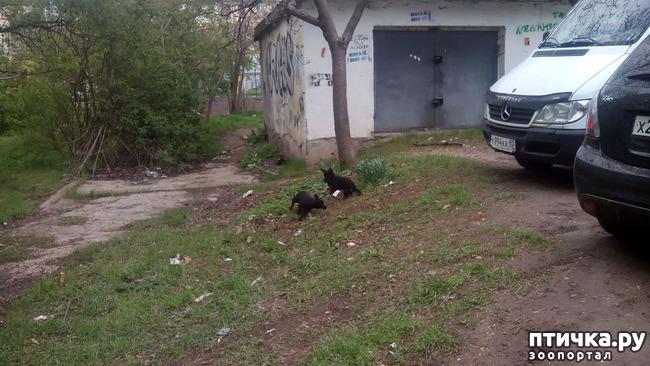 фото 4: Собак нам еще и не хватало!