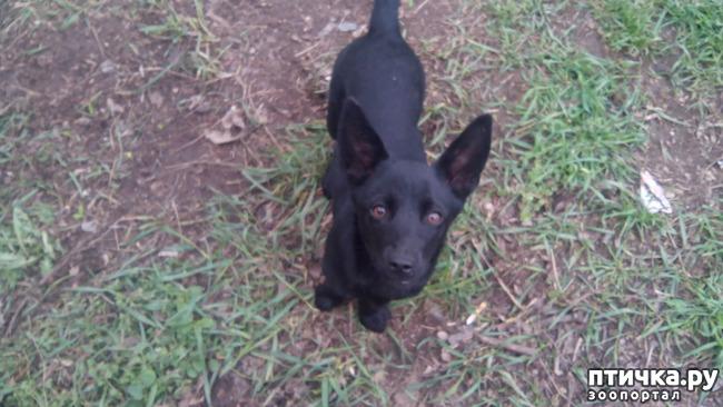 фото 5: Собак нам еще и не хватало!