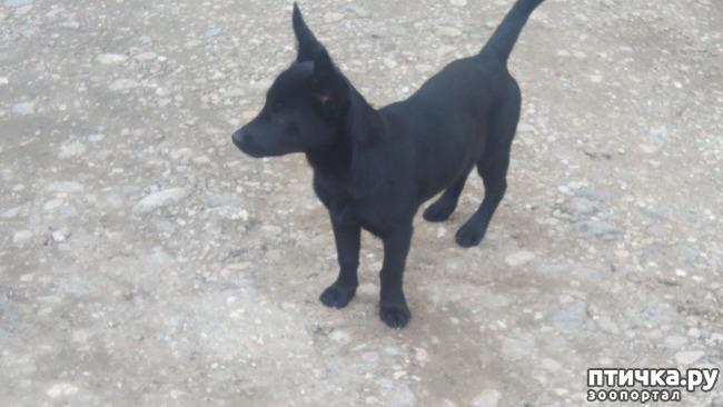 фото 6: Собак нам еще и не хватало!