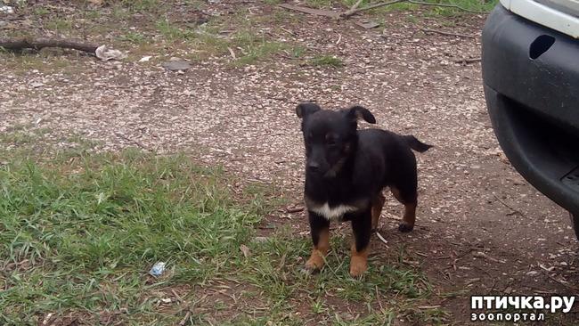 фото 7: Собак нам еще и не хватало!