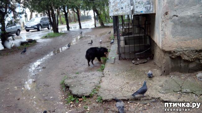 фото 2: Собак нам еще и не хватало!