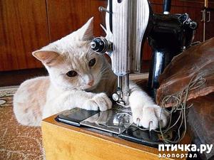 фото: Коты - самые лучшие помощники по хозяйству