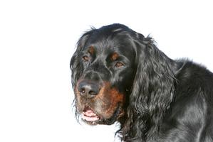 фото: Воспитанная собака.