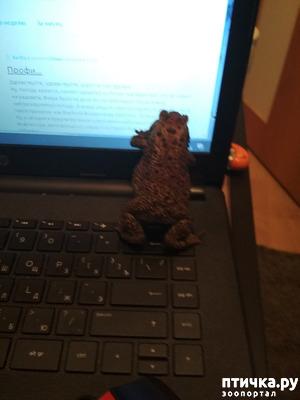фото: Чернорубцовая жаба с нами уже месяц!