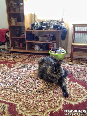 фото: Кошкина жизнь