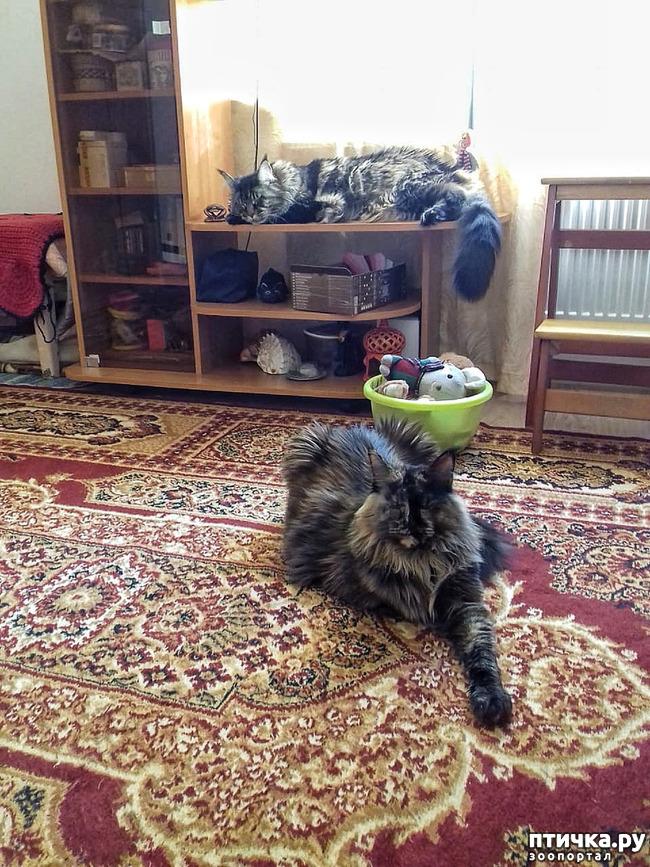 фото 1: Кошкина жизнь