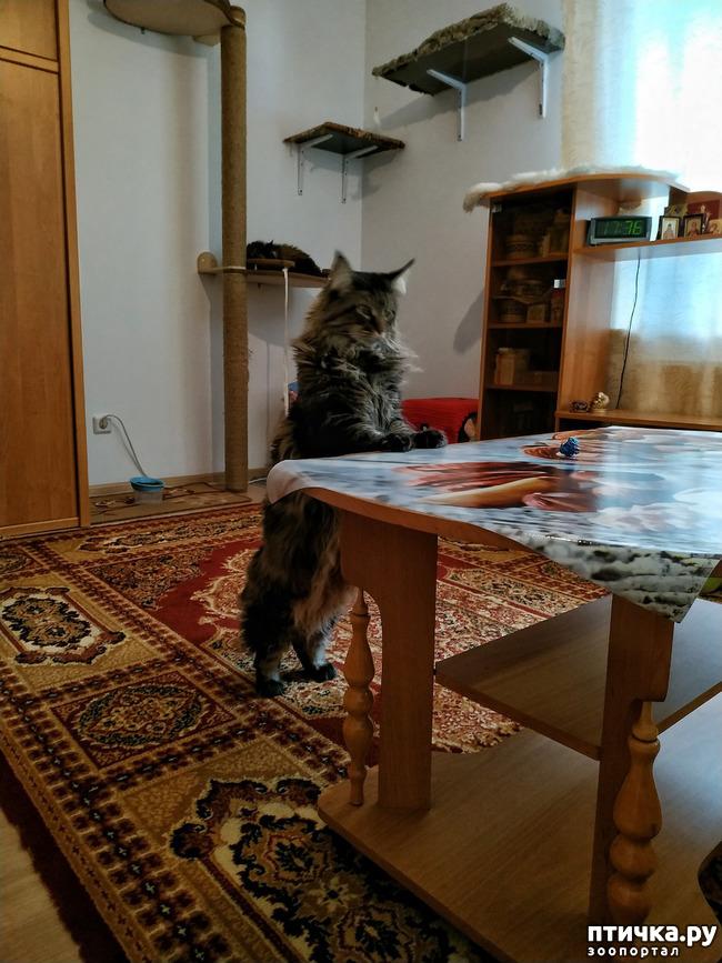 фото 4: Кошкина жизнь