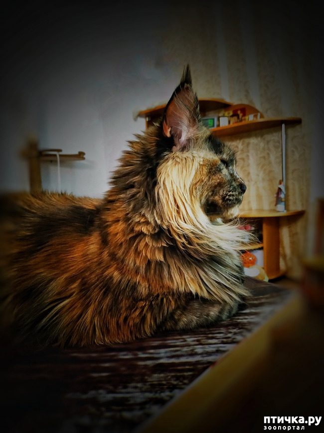 фото 7: Кошкина жизнь