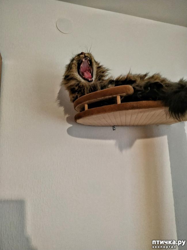 фото 8: Кошкина жизнь
