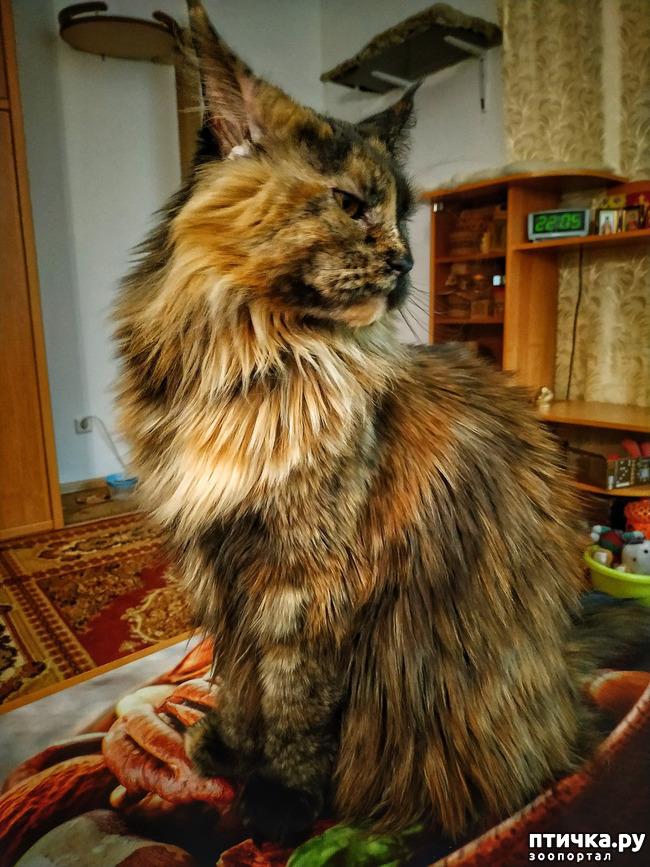 фото 6: Кошкина жизнь