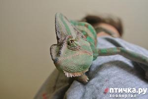 фото: Как черепахи, лягушки и прочие могут быть домашними питомцами.