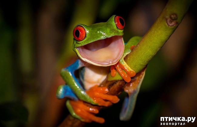 фото 9: Могут ли лягушки быть милыми