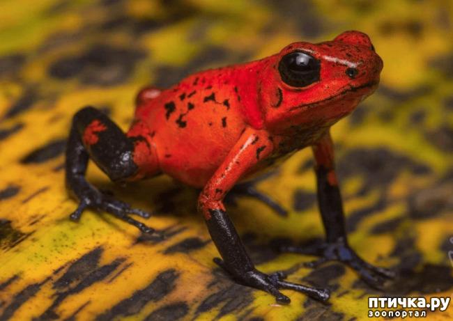 фото 20: Могут ли лягушки быть милыми