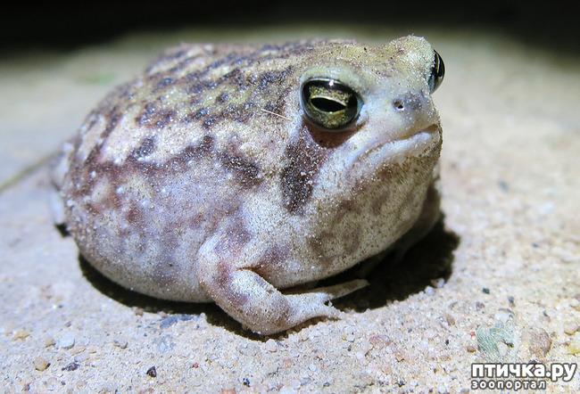 фото 3: Могут ли лягушки быть милыми