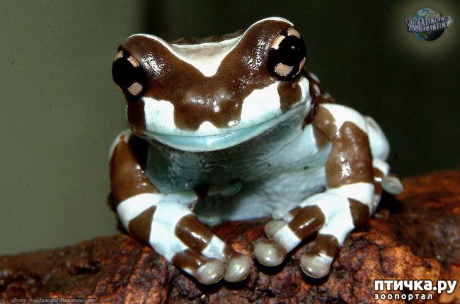 фото 10: Могут ли лягушки быть милыми