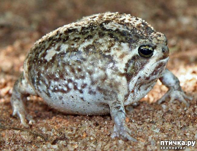 фото 4: Могут ли лягушки быть милыми
