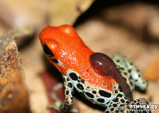 фото 19: Могут ли лягушки быть милыми