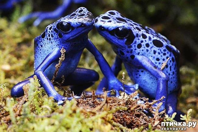 фото 21: Могут ли лягушки быть милыми