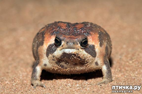 фото 5: Могут ли лягушки быть милыми