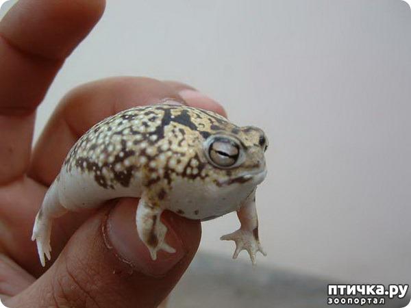 фото 6: Могут ли лягушки быть милыми