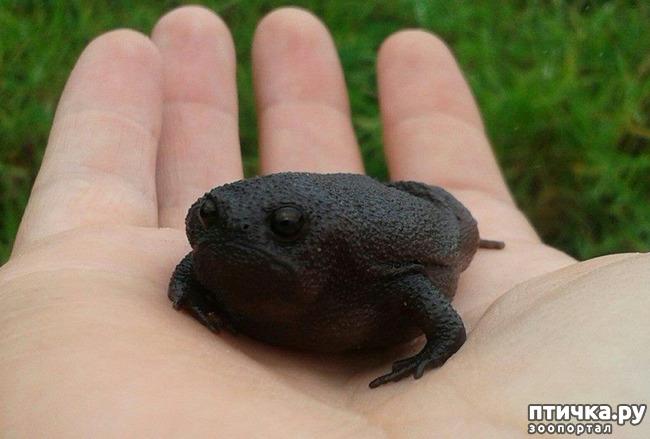 фото 7: Могут ли лягушки быть милыми