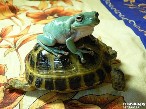 фото 11: Могут ли лягушки быть милыми