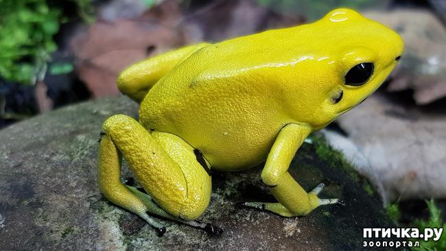 фото 13: Могут ли лягушки быть милыми