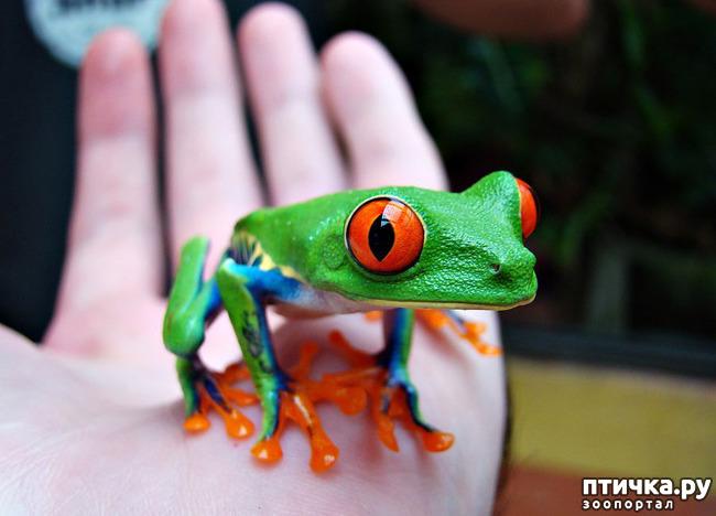 фото 8: Могут ли лягушки быть милыми