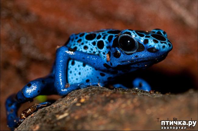 фото 16: Могут ли лягушки быть милыми