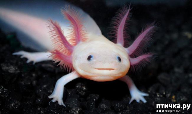 фото 1: Могут ли лягушки быть милыми