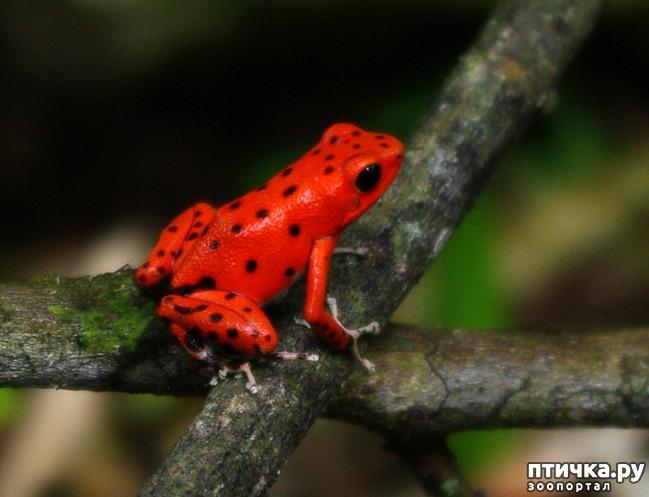 фото 17: Могут ли лягушки быть милыми