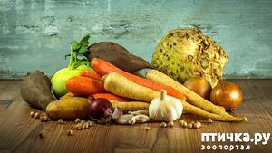фото: Что в миске: овощи в сухих кормах