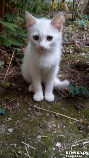 фото: Еще одному беленькому котенку повезло!