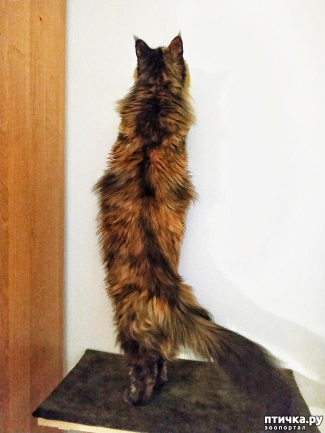 фото 4: Какие же они длинные!!!